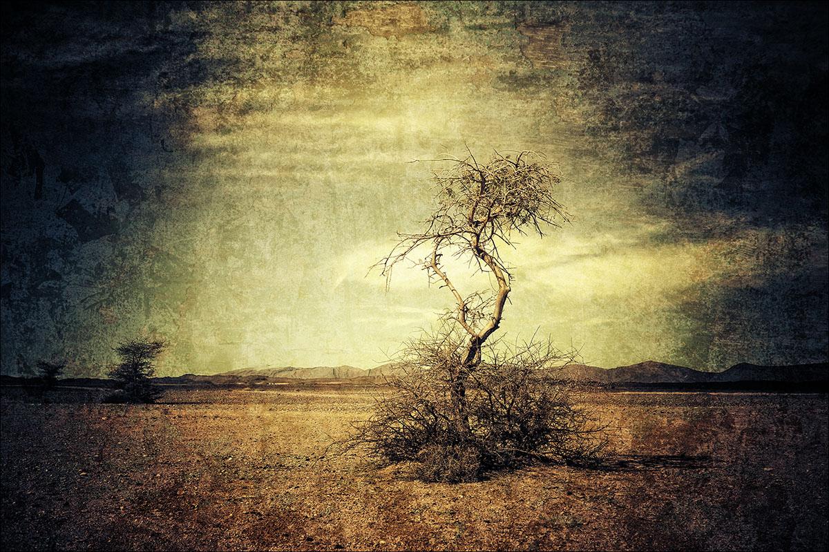 arbre_maroc